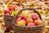 Jablka, autor: Tyres s.r.o.